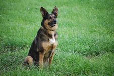 Free Dog In Green Field Royalty Free Stock Photos - 13930388