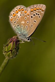Free Butterfly Stock Photography - 13932442