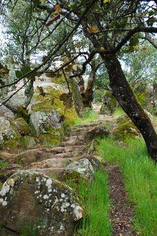 Free Mountain Trail Stairway Stock Photo - 13933440