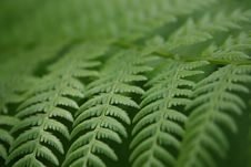 Free Fern Stock Photo - 13934420