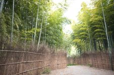 Free Bamboo Forest Royalty Free Stock Photo - 13934625