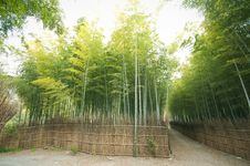 Free Bamboo Forest Royalty Free Stock Photo - 13934665