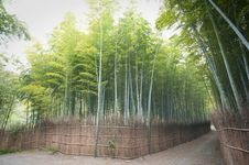 Free Bamboo Forest Stock Photography - 13934682