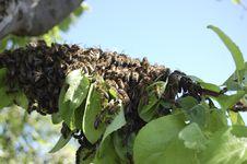 Free Swarm Stock Image - 13934891