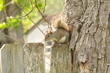 Free Cat Squirrel Royalty Free Stock Images - 13934979
