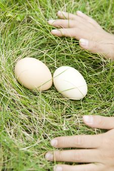 The Egg  On Lawn,  Hand Stock Photo