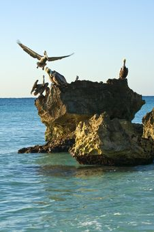 Free Pelicans Sitting On A Rock Stock Photography - 13935412