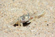 Free Crab Stock Photos - 13935733