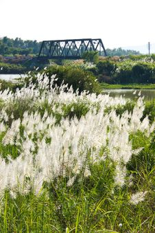 Free Vista Flowers Grass And Bridge Railway Stock Images - 13936224