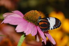 Free Daisy & Butterfly Stock Photography - 13936392