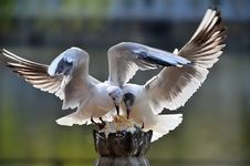 Free Seagull Stock Photos - 13936743
