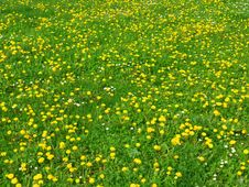 Free Spring Meadow Stock Photos - 13937763