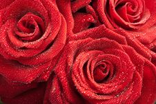 Free Red Roses With Water Droplets Stock Image - 13937801