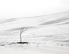 Free Lonely Tree Stock Photos - 13938063