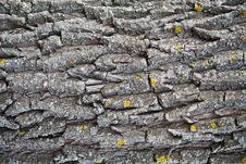 Free Tree Bark Royalty Free Stock Photo - 13938205