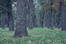 Free Autumn In Wood Royalty Free Stock Photography - 13939617