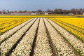 Free Field Of White And Yellow Flowers Stock Photo - 13948980