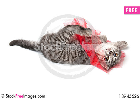 Free Isolated Grey Kitten Royalty Free Stock Image - 13945526