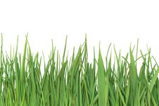 Free Green Grass Royalty Free Stock Photography - 13940077
