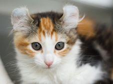 Free Kitten Stock Photography - 13941032