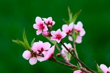 Free Spring Flowers Royalty Free Stock Images - 13941319