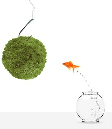 Free Goldfish Leaping Towards Green Planet Bait Royalty Free Stock Photos - 13941878