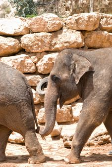 Free Elephant Royalty Free Stock Photo - 13944305