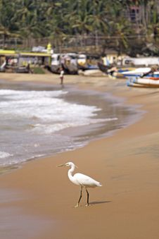 Free Egret By The Ocean Royalty Free Stock Image - 13944446