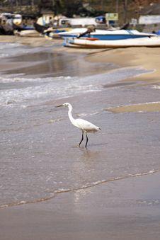 Free Wading Egret Stock Images - 13944494