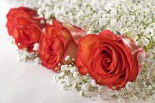 Free Roses Royalty Free Stock Image - 13946796