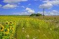 Free A Beautiful Field Of Flower Stock Photo - 13953970