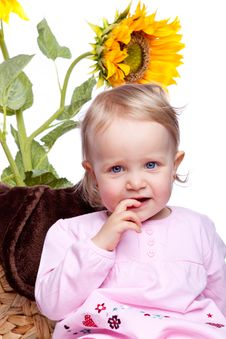 Free Baby Girl With Sunflower On White Stock Image - 13950951