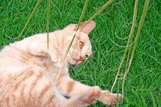Free Tawny Cat Stock Photo - 13951300
