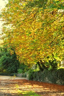 Free Autumnal Shades Royalty Free Stock Photography - 13952397