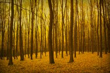 Vintage  Forest Photo Stock Images