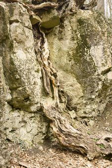 Fanciful Root Royalty Free Stock Photography