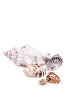 Free Seashell Stock Photography - 13953722