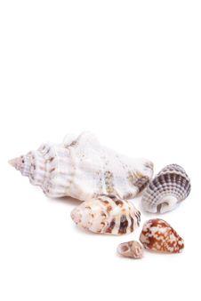 Free Seashell Stock Photography - 13953722