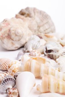 Free Seashell Royalty Free Stock Images - 13953729