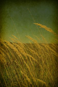 Free Grass  Background Royalty Free Stock Image - 13954096