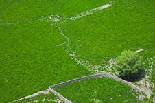 Free Aerial View Of Green Fields Royalty Free Stock Photography - 13954677