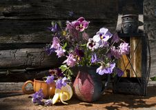 Free Still Life With Pansies Royalty Free Stock Photo - 13955355