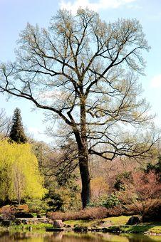 Free Japanese Garden Stock Image - 13956271