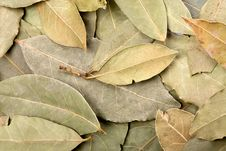 Free Bay Leaves Background Royalty Free Stock Photo - 13956395