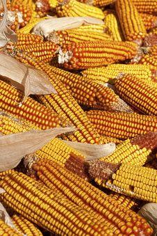 Free Dry Corncob Pile On A Farm Stock Photo - 13957070