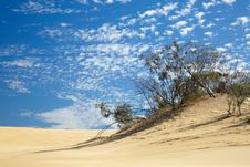 Free Small Trees In Desert Royalty Free Stock Photo - 13957435