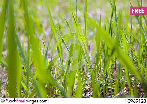 Free Texture Of Grass Stock Photos - 13969123