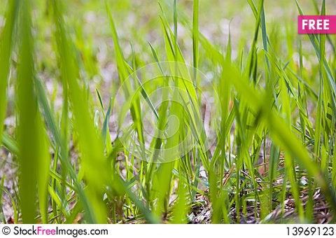 Free Texture Of Grass Stock Photos - 13969123