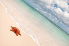 Free Red Starfish On A Sand Beach Royalty Free Stock Photography - 13960497