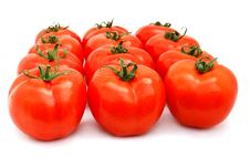 Free Tomatoes Group Royalty Free Stock Images - 13960849